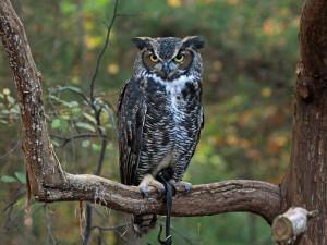 Owl.Tree