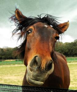 cute_funny_animals_horse_48